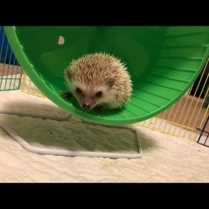 Other - My Photogenic Baby Hoggies (NOT FOR SALE)